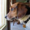 ansiedad por separacion canina