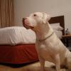 ¿Qué habitación es mejor para mi mascota?