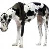 Crecimiento y desarrollo del perro