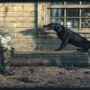 El perro y el hombre