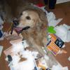Destrozos de perros