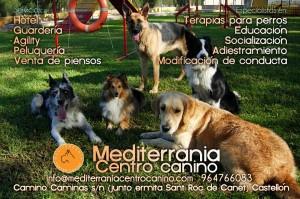 Servicios que ofreccemos para nuestras mascotas