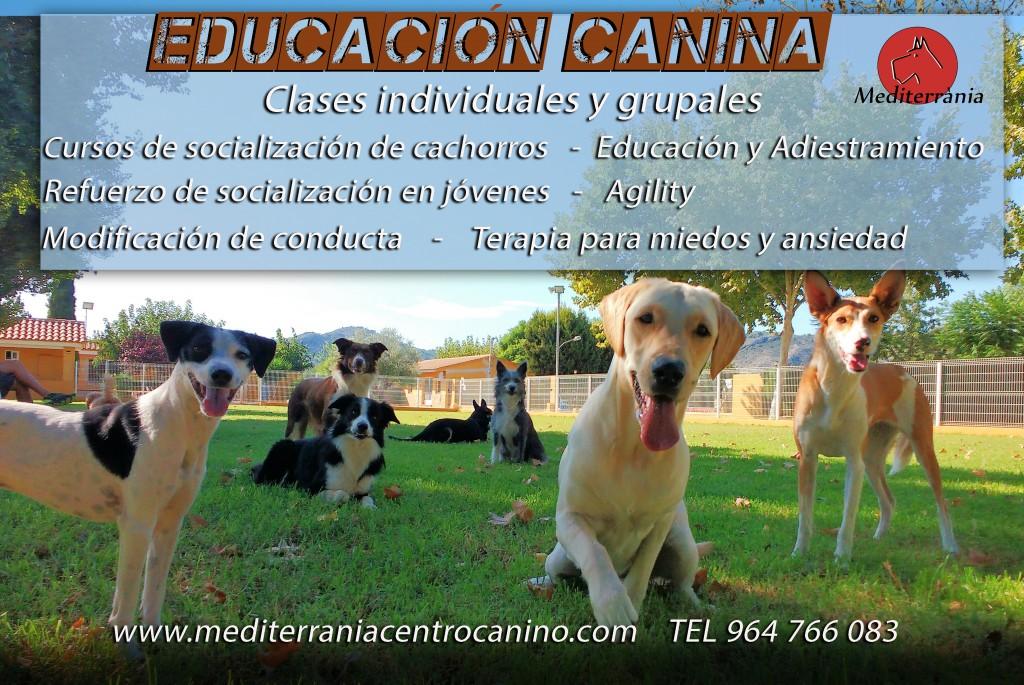 mediterrania educacion canina