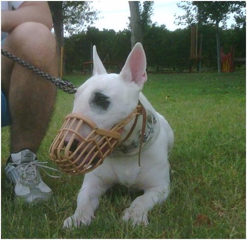 Perro peligroso con bozal