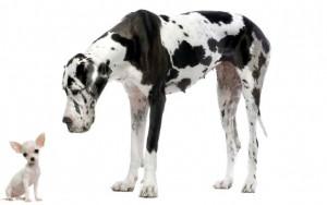 perro grande perro pequeño