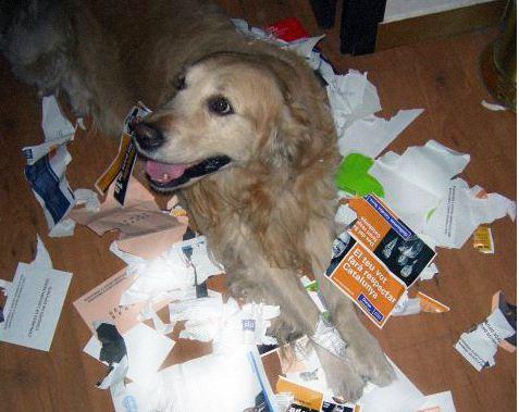 buntildeuel un perro andaluz essay