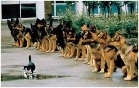 Perros sentados mientras pasa un gato